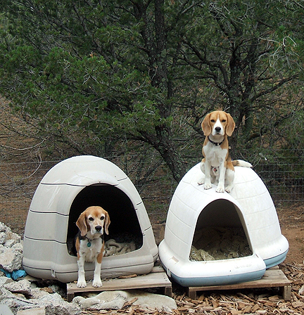 Dogloo Dogs & Dart Beagle pezcame.com