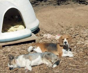 Sun Napping