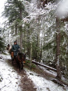The snow started melting off the trees in torrents, really and it was just as wet riding with all the moisture falling out of the trees as falling out of the sky!