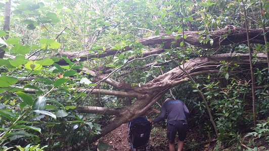 Hiking under a tree that had fallen across the trail.